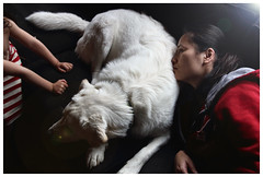 lfe s good (lifemage) Tags: life family light portrait dog pet art love photography mix lab artistic pyrenees lifemage