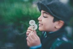 Rosenberg-Ana_-1-120 (Ana~Rosenberg) Tags: boy lensbaby child dandelion explore walktoschool seeinanewway sweet35 composerpro