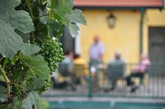 Gsing am Wagram Weinviertel Niedersterreich DSC_0479 (reinhard_srb) Tags: am terrasse gelb grn niedersterreich heuriger wein wagram gemtlich weinviertel weintrauben gste gsing