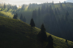 Another day, another miracle.. (George Pancescu) Tags: morning trees light mountain tree green nature landscape nikon europe natural outdoor romania rays 70200mm massif ciucas d810 outstandingromanianphotographers