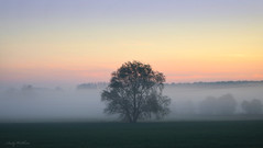 Foggy morning (AndyW Harz) Tags: nebel feld morgen baum wegrand