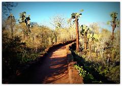 P4181642 (olavagnar) Tags: southamerica inca ecuador inka andes equator dios amerindian lasierra spanishlanguage republicofecuador colonized incaempire patriaylibertad sramerika ekvator inkariket repblicadelecuador amerindiangroups colonizedbyspain viceroyaltyofnewgranada