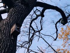 2015-11-10 07.19.53 1 (anastasiya_klenyaeva) Tags: trees sky nature russia autmn     saratov vsco vscocam vscorussia vscosaratov