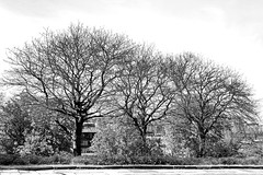 trees (Harry Halibut) Tags: park trees bw blancoynegro branco blackwhite noiretblanc pavement branches south sheffield yorkshire hill images preto flats roadside leafless zwart wit weiss bianco blanc nero skeletal allrightsreserved noire schwatz sheffieldbuildings contrastbysoftwarelaziness colourbysoftwarelaziness imagesofsheffield sheffieldarchitecture 2016andrewpettigrew sheff1605041823