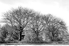 trees (Harry Halibut) Tags: park trees bw blancoynegro branco blackwhite noiretblanc pavement branches south sheffield yorkshire hill images preto flats roadside leafless zwart wit weiss bianco blanc nero skeletal allrightsreserved noire schwatz sheffieldbuildings contrastbysoftwarelaziness colourbysoftwarelaziness imagesofsheffield sheffieldarchitecture 2016andrewpettigrew sheff1605041823
