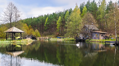 Serenity (zimoch84) Tags: panorama lake swan peace calm serenity hdr dywan panasonic20mmf17 dugiweekendmajowysominy