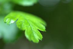 DSC_0116.NEF (tibal26) Tags: flower closeup natural x10