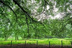 DSCF2340.tif (Ad Sebregts) Tags: forest margriet
