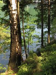 IMG_6222 (germancute ***) Tags: wood lake plant flower nature forest germany landscape see thüringen wasser outdoor thuringia blume wildflower landschaft wald germancute