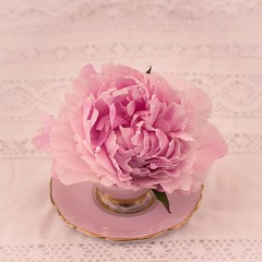 pink peony in pink teacup (photoart33) Tags: pink stilllife vintage pretty lace peony teacup