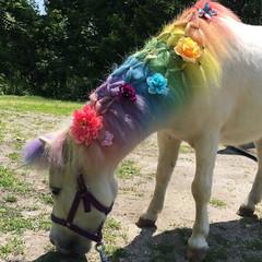 Unicorn Horn for Horse on Browband, brow band, Unicorn Horn... (artforahome) Tags: horse for blog costume rainbow horn unicorn browband
