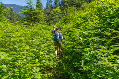 Heavy bush (Bob_2006) Tags: june hike 2016 goldenearsprovincialpark evansvalley