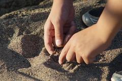 Playing in sandbox () Tags: minolta sony af 100300mm f4556 slta57 57