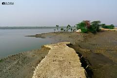 IMG_1111 sig (Subir Mukherjee Photography) Tags: sunderbanindiandelta mangroveforest royalbengaltiger rain forest