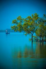 IMG_0669 (Subir Mukherjee Photography) Tags: sunderbanindiandelta mangroveforest royalbengaltiger rain forest