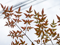 (takafumionodera) Tags: em1 japan leaf olympus omd odawara
