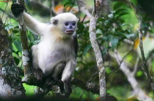 Khu bảo tồn Na Hang với hệ sinh thái phong phú gồm nhiều loại động vật quý hiếm