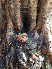 Shiva temple tree