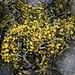 Algues, Tobermory, île de Mull, Argyll and Bute, Ecosse, Grande-Bretagne, Royaume-Uni.