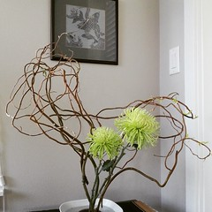 Another go with my #ikebana