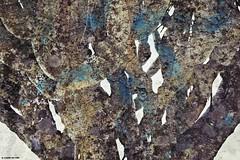 Drago Azul (El viajero del Faro) Tags: naturaleza textura azul rboles canarias rbol tenerife drago