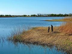 An der Puddeminer Wiek (Wunderlich, Olga) Tags: nature landscape natur rgen hafen landschaft mecklenburgvorpommern inselrgen puddemin