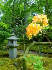 Japanese Garden-019 (Quetzalcoatl002) Tags: flowers garden japanesegarden estate denhaag zen horticulture stillness thehague clingendael landgoed