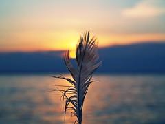 thinking of u (beachbum prints) Tags: sunset ontario canada feather sarnia april