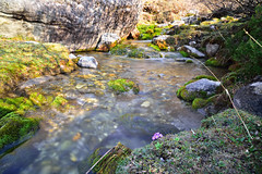 Purple Flower (shizham) Tags: morning sunlight flower water stream purple langtang kyanzin
