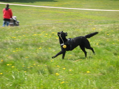 IMG_0232 (familymeyrath) Tags: dog motion wand hohe