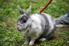DSC_1037 (divi333) Tags: rabbit bunny bunnies ferrara rabbits conigli coniglio 2016 conigliando