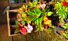 20150822_144217 (Megaolhar) Tags: flores toy flickr do dia vale paulo apa bom inverno são campos facebook tuka jordão paraíba fazendinha 2016 youtube ibama twitter jardinagem bioma gomeral