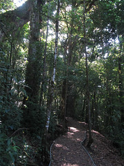 "La Réserve de Monteverde <a style=""margin-left:10px; font-size:0.8em;"" href=""http://www.flickr.com/photos/127723101@N04/26945036525/"" target=""_blank"">@flickr</a>"