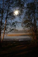 Fiskarviken (Dencku) Tags: moon mist tree beach fog night strand suomi finland koivu spring haze may moonlight birch bjrk puu natt trd archipelago kuu maj mne vr y ranta skrgrd dimma usva sumu kevt siuntio saaristo toukokuu sjunde mnsken kuunvalo fiskarviken