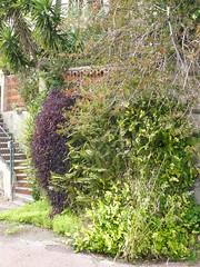 le jardin vertical (Claudie K) Tags: opuntia escalier yucca cerbre briques fougres languedocroussillon clture bougainville ctevermeille misres