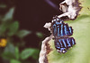 Stratford-Upon-Avon Butterfly Farm (Simon Clare Photography) Tags: butterfly buttery farm wildlife nature animal insect bug butterflyfarm stratforduponavon stratford macro pattern photographs for sale wwwsimonmaisiephotographycoukprints