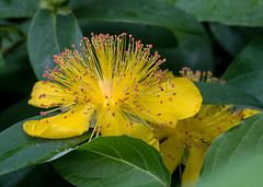 Digitaly done. (Omygodtom) Tags: flower macro nature fog digital outdoors mono nikon bokeh hiking speical tamron90mm d7100