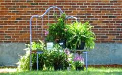 repurposing (muffett68 ) Tags: brick wall garden reuse odc repurpose plantstand ansh ironbedstead howdoesyourgardengrow scavenger13 itsgettingold