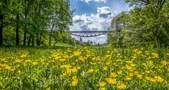 The Dale of Yellow Flowers (Alex Demich) Tags: bridge flowers blue trees sky panorama plants white house flower tree green nature grass yellow clouds forest river landscape countryside spring flora dale cloudy outdoor meadow rail railway vale valley outskirts grassfield