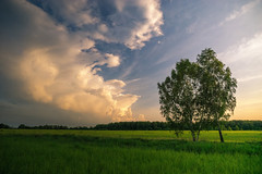 Under The Care Of Clouds (VIIIIVIIIIX) Tags: blue light shadow sky cloud sun white plant tree green nature beauty field grass yellow clouds zeiss forest landscape photography gold evening amazing warm russia outdoor sony wide cottage may silence hour serene 12mm touit a6000