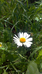 114 (jurinkof) Tags: fleurs blten   kvety kvty