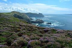 Skomer (Daggormet) Tags: sea wild nature beautiful wales landscape island nikon pretty westwales natural heather cliffs polarizer pembrokeshire polariser skomer nikond5200