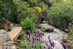 Arroyo la Chorrera, Horcajo de los Montes - 2 (amerida59) Tags: lachorreradehorcajodelosmontes cantueso arroyodelachorrera cabaeros