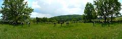 Graveyard nr 4 in Grab village, Poland (Great War cemetery) (morgan_ghost) Tags: graveyard cemetery grab