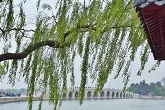 17 Arch Bridge at the Summer Palace (stevelamb007) Tags: china bridge people lake tree water nikon arch beijing willow 17 summerpalace 17archbridge nikkor18200mm stevelamb d7200