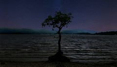 Milarrochy Bay (Michelle O'Connell Photography) Tags: milarrochybay balmaha scotland trossachs tree lonesometree nightsky michelleoconnellphotography