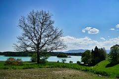 The tree.... (phozuppel) Tags: landscape bayern see wasser sony himmel wolken blau landschaft baum osterseen alpha6000