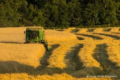 Harvesting Rye (Thomas DeHoff) Tags: yellow john sony iowa rye combine deere harvesting a580