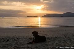 Praia do Pontal (takashi_matsumura) Tags: praia do pontal sigma 1750mm f28 dc ex hsm paraty rj rio de janeiro brasil brazil nikon d5300 sunrise beach dog fauna