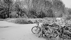 (Black and) White (Ineke Klaassen) Tags: bicycle snow sneeuw nijmegen nederland winter hó neve schnee снег nieve neige hiver invierno зима white wit fiets fietsen blackandwhite blackwhite zwartwit outdoor monochrome objects voorwerpen object voorwerp bw zw 7dwf sony 15faves 400views 1025fav 2550fav 25faves 25favs 600views 30faves 800views